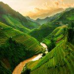 Local Media Services in Vietnam