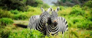 The best video & photo services in Limuru, Kenya
