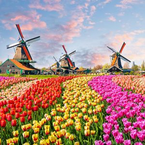 Best local production services in the Netherlands
